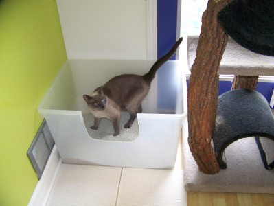 A large box with two exit routes, out the front or jump out the  top onto cat condo.