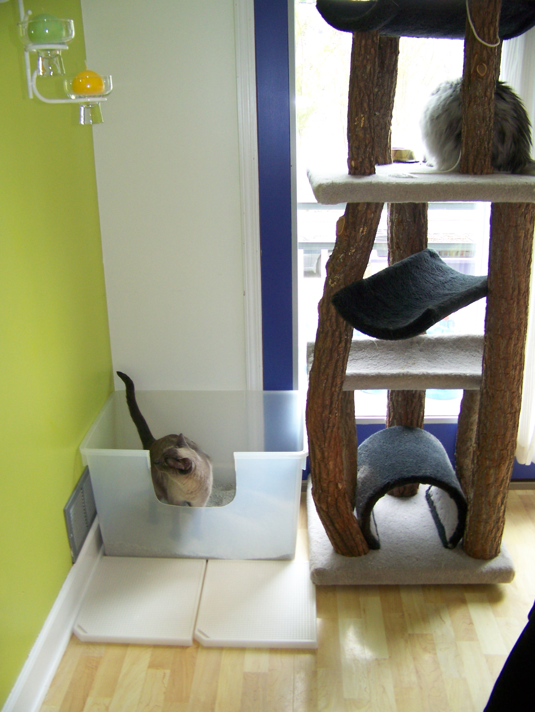 Note two exit points, cut opening and cat condo.