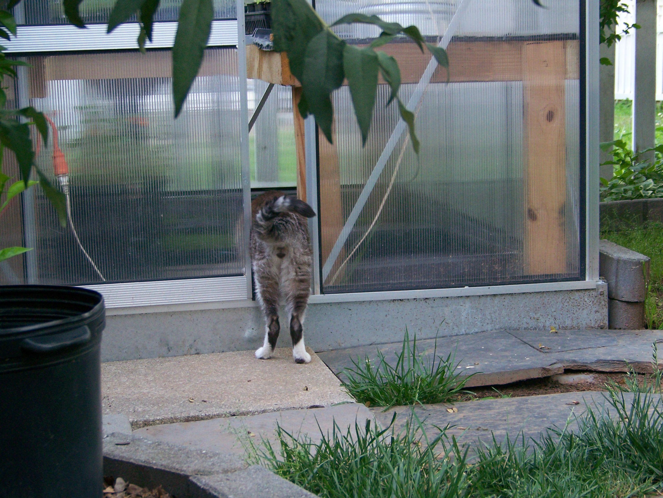 help my cat got out fundamentally feline