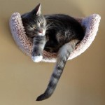 Marcus Gallagher relaxing in his scoop bed by Fundamentally Feline!