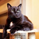 Simon's headshot! And the naysayers say black cats can't be photographed well! Bah!