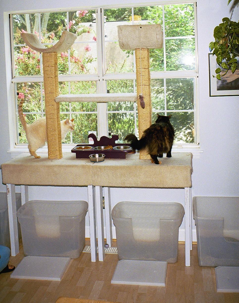 Cat defecating outside litter box older