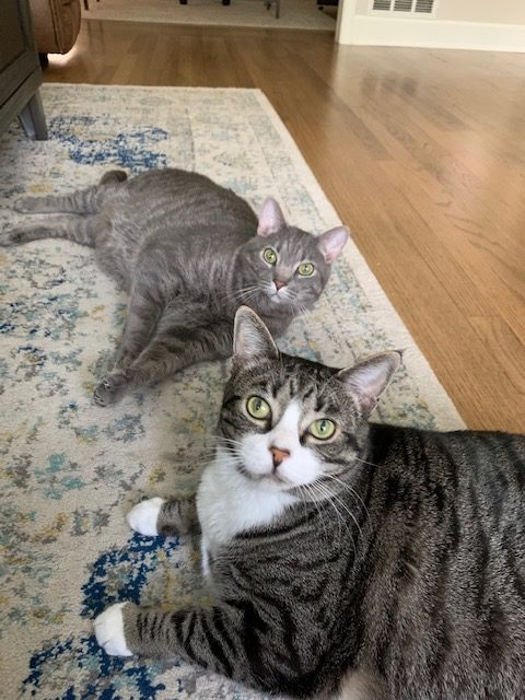Adrienne Polk cats 2