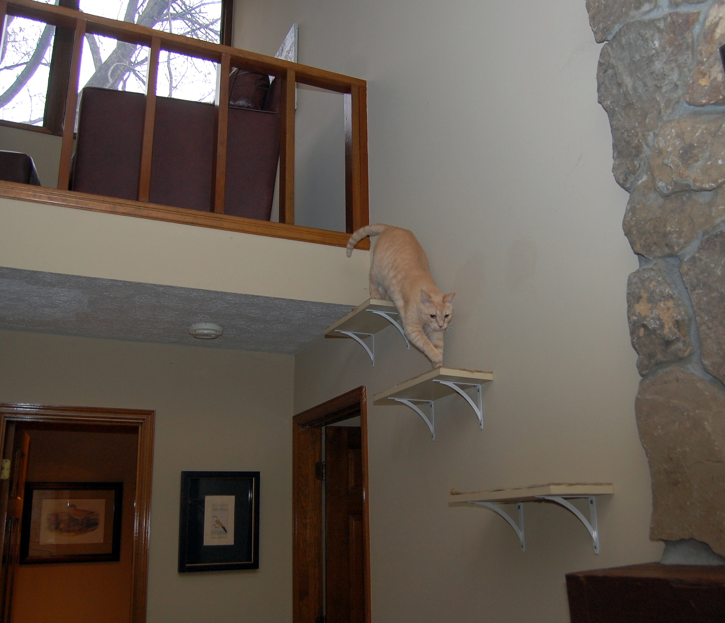 Robin exiting loft to sisaled steps to the mantle!