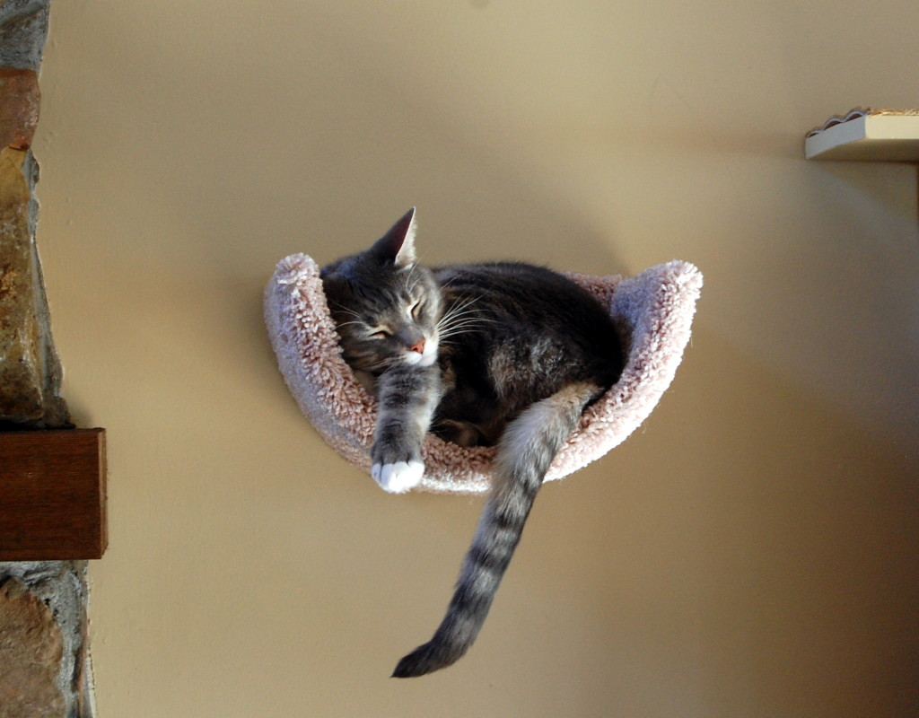 Wall Mounted Scooped Beds Fundamentally Feline