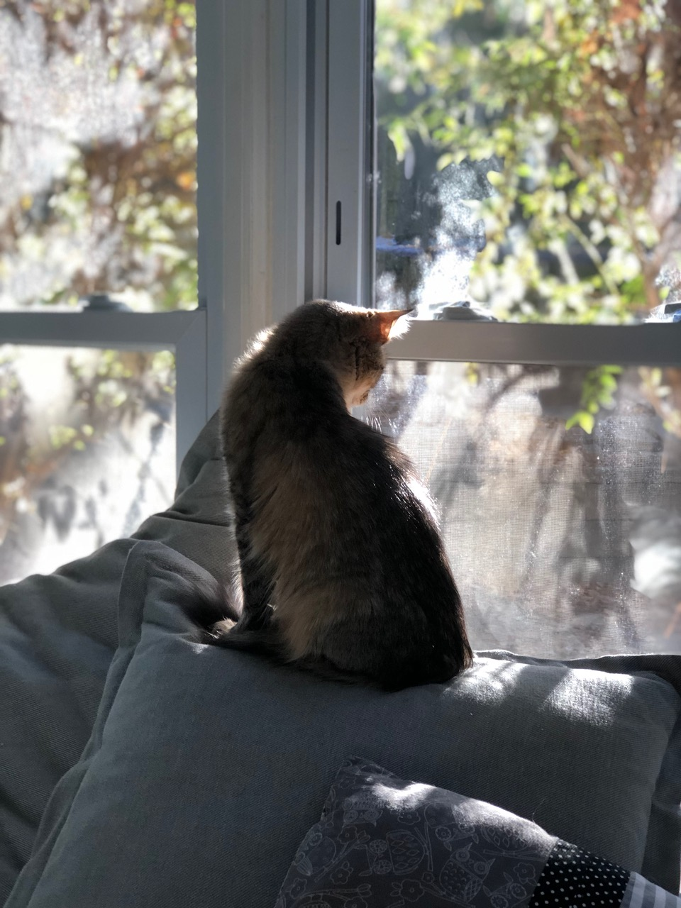 Frame cat pics 4