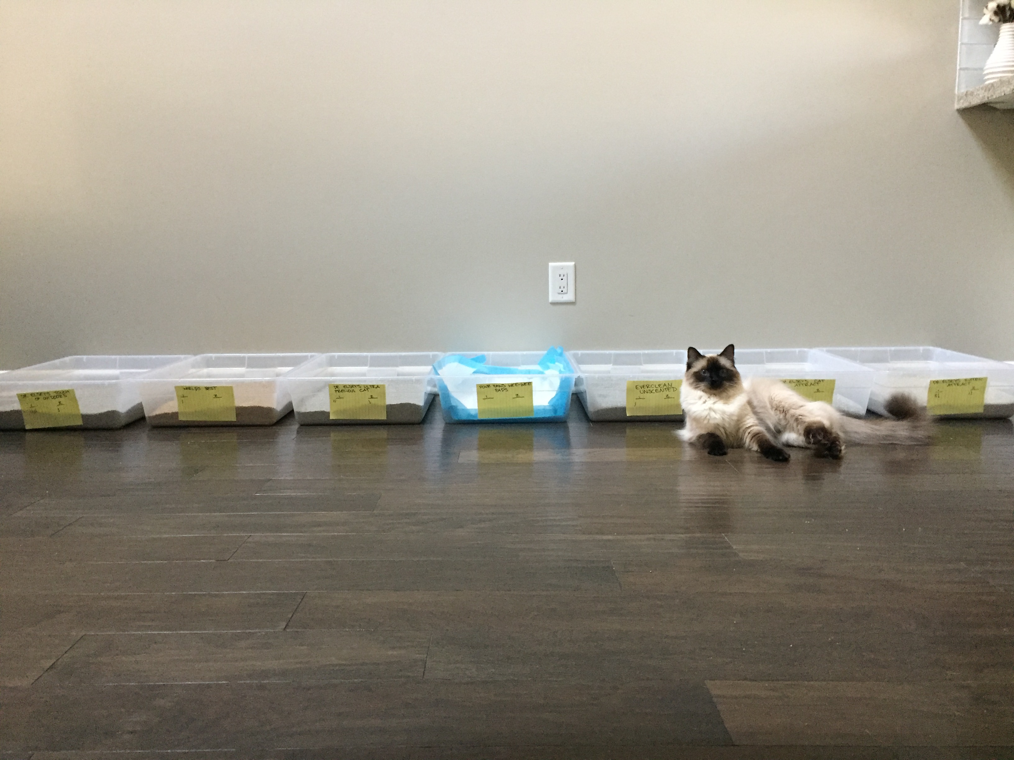 Henry modeling in front of his litter box cafeteria.