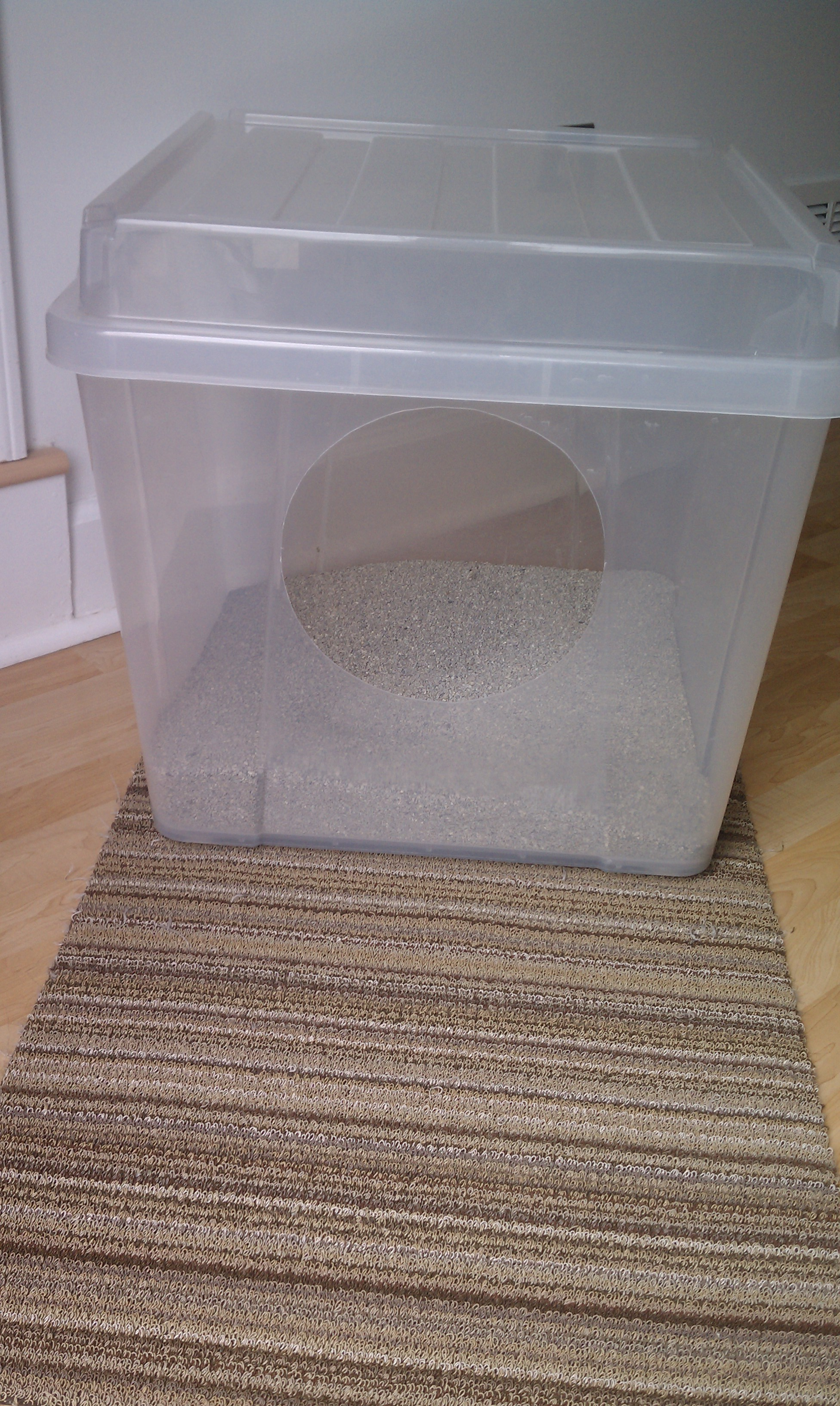 Litter Boxes Get The Scoop What Kind How Many And Where