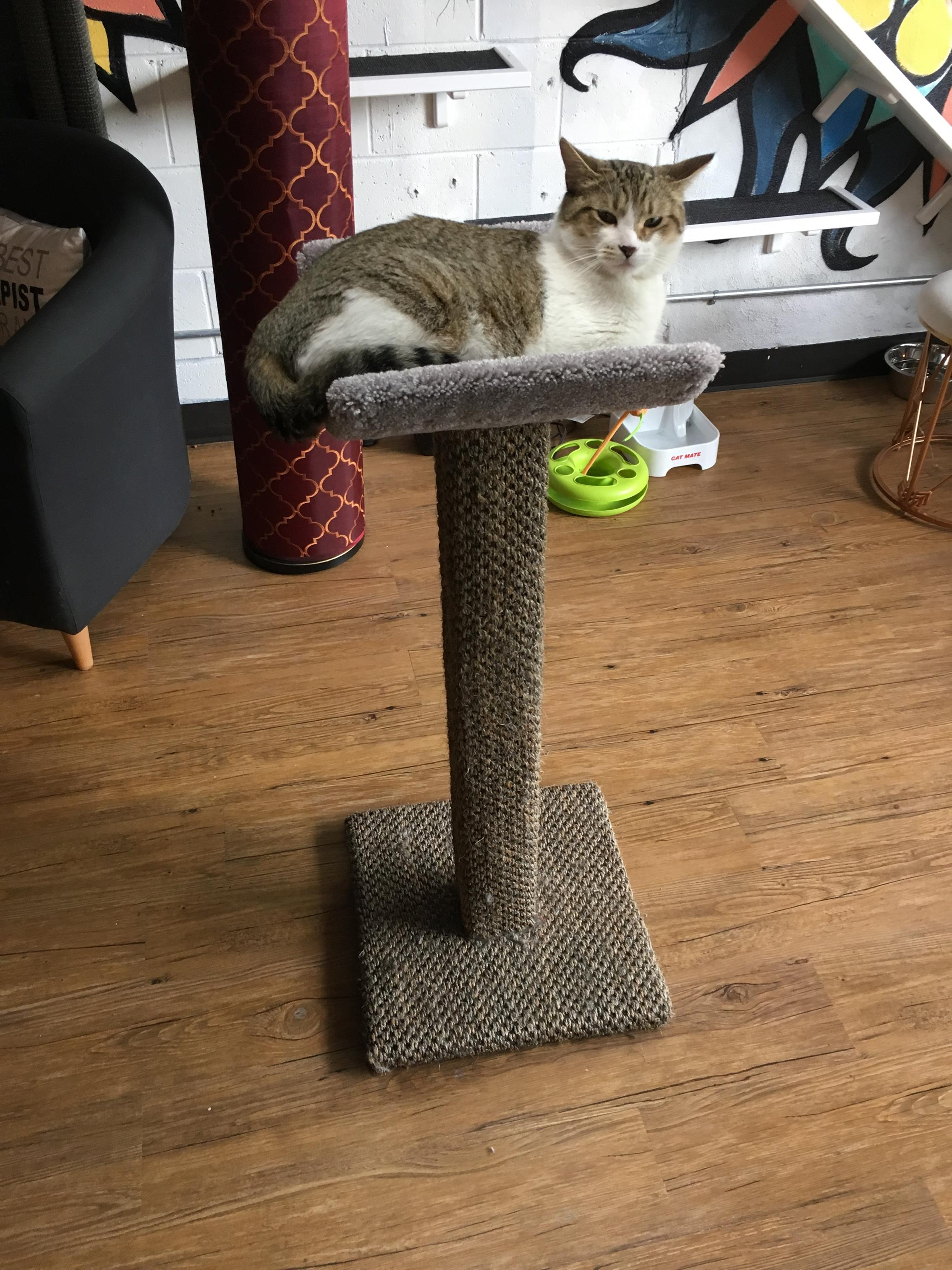 Wouldn't be complete without one of our signature scooped scratching posts.
