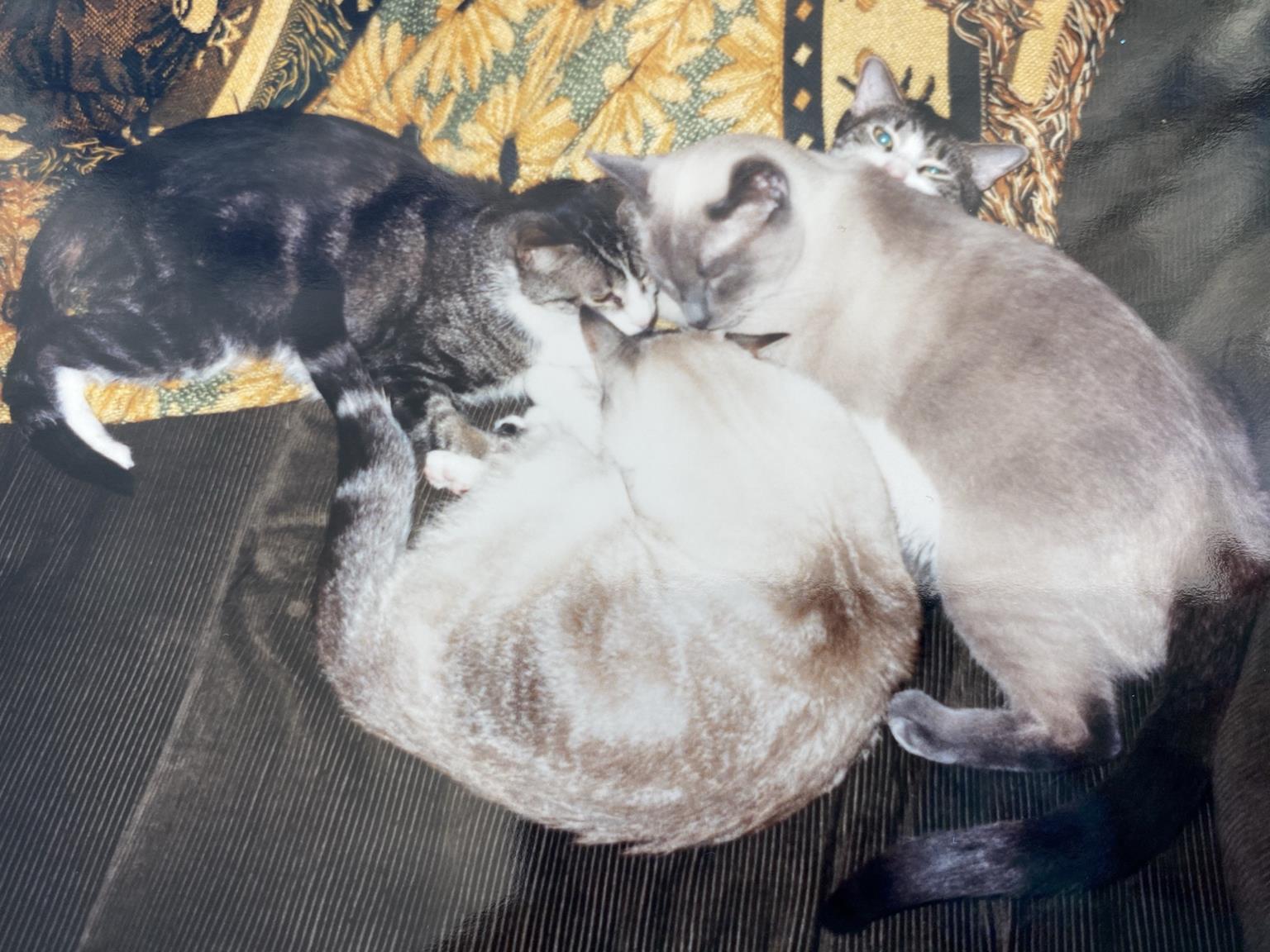 Festus being squished by Shadow, Lynx & Mercury.
