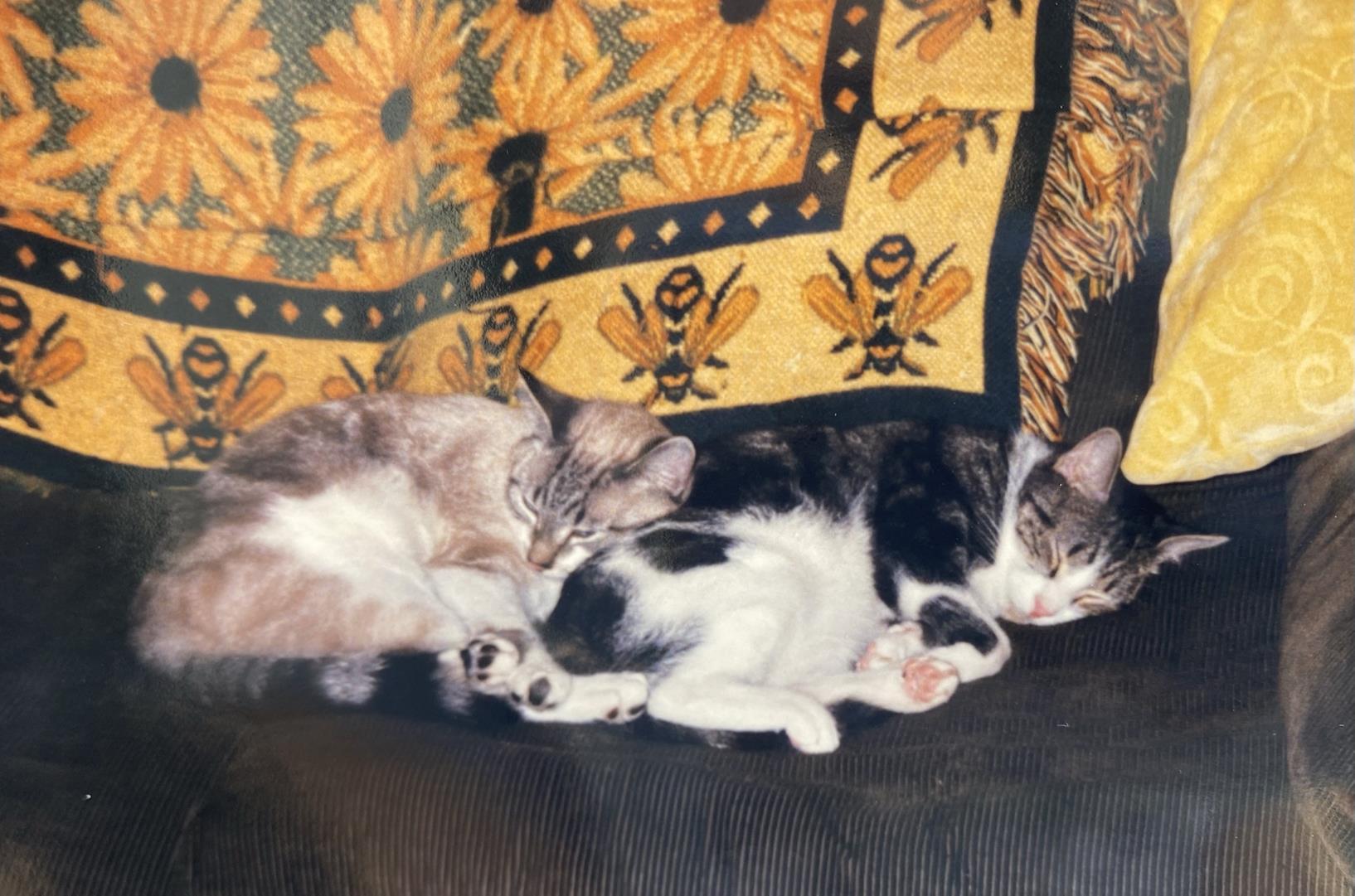 Lynx and Festus cuddle train.