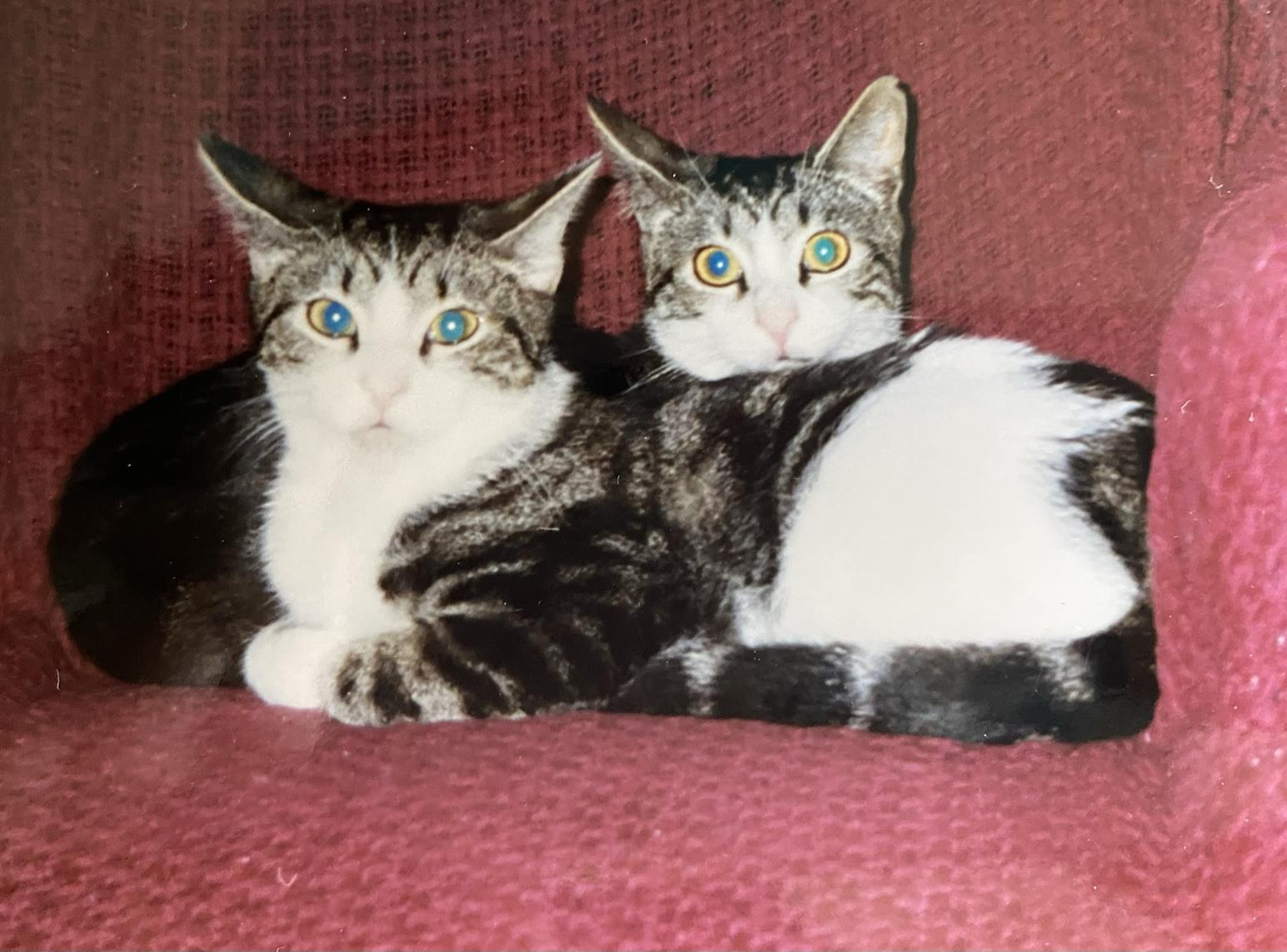 A two-headed tabby monster.