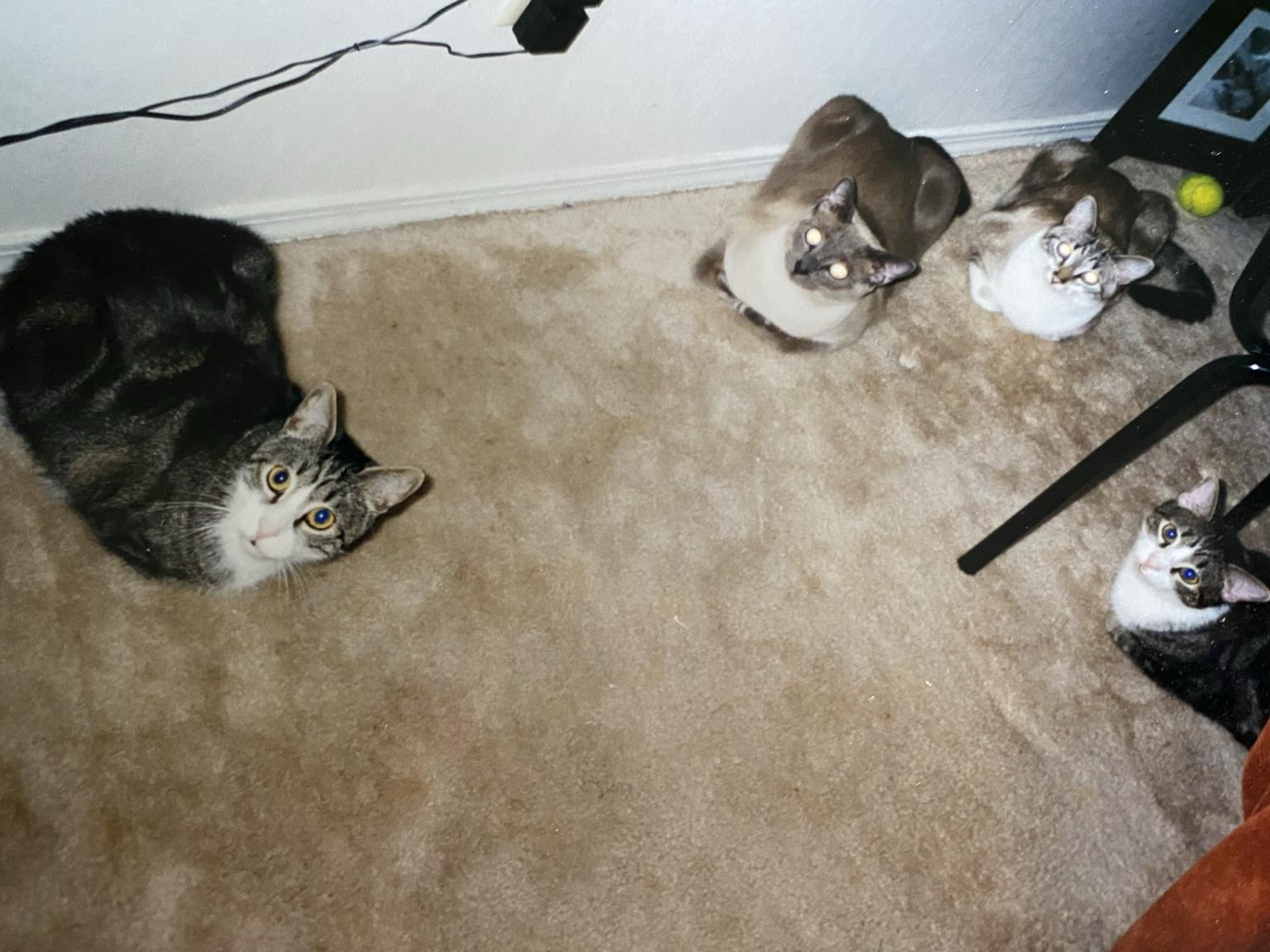 """All four of our 1st boys in """"loaf"""" position."""