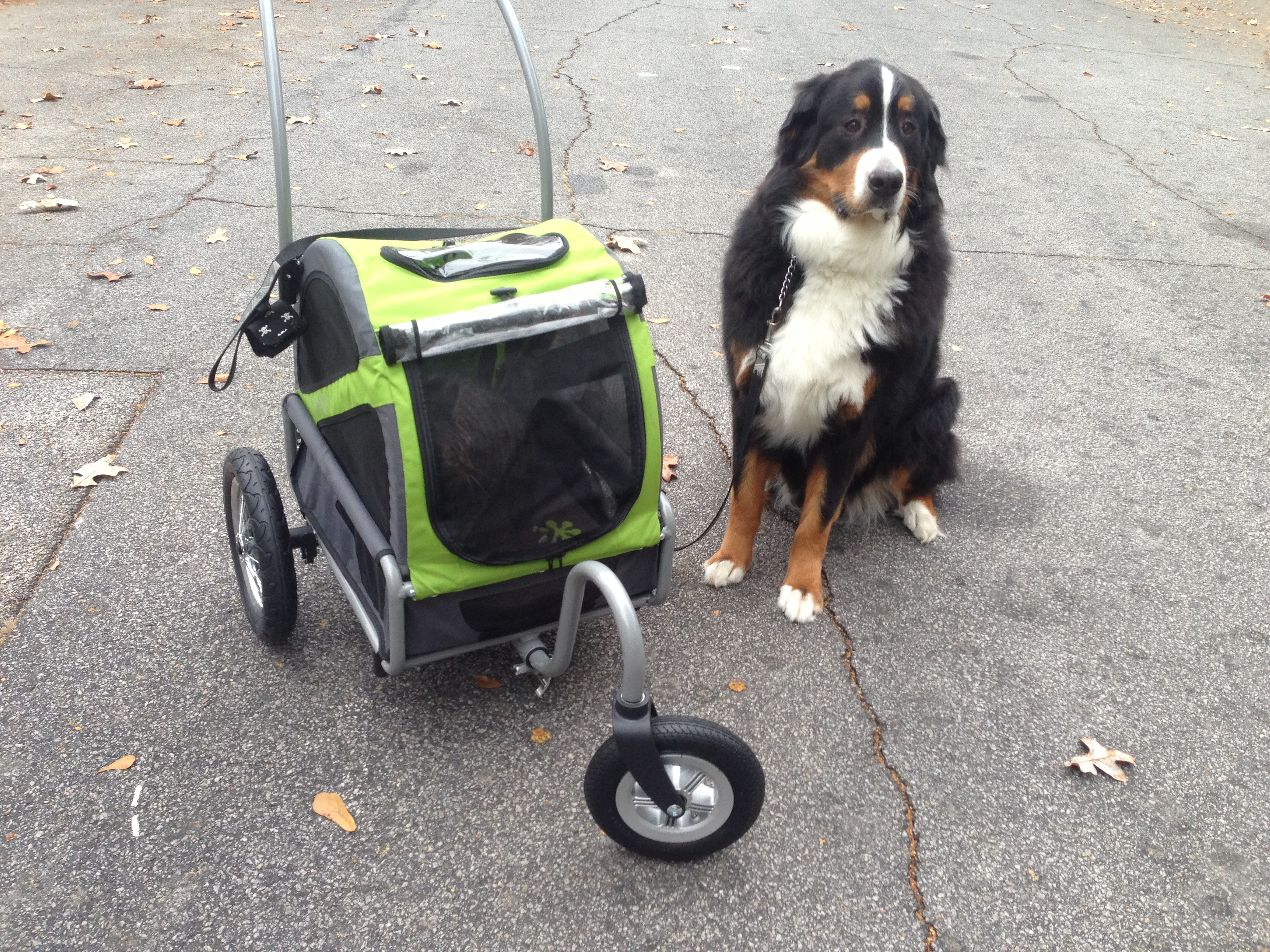 Of course bring the dog along on your stroller rides!