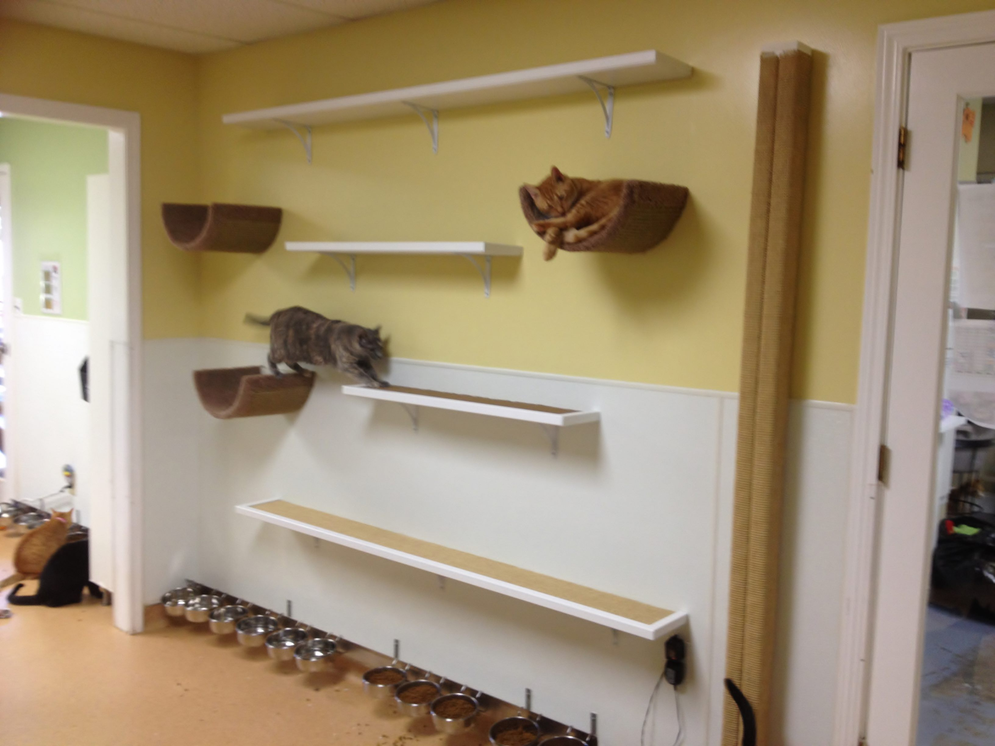 Installed in the Furkids shelter.