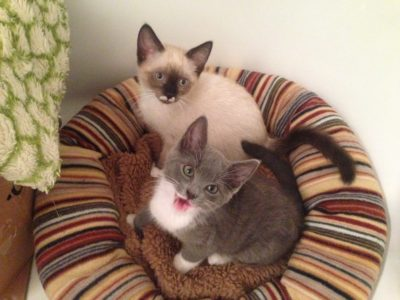 Always best to adopt two kittens together.