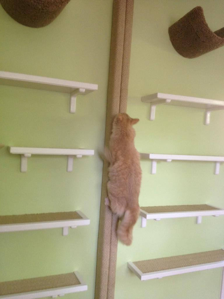 Pete exploring vertical space by Fundamentally Feline.