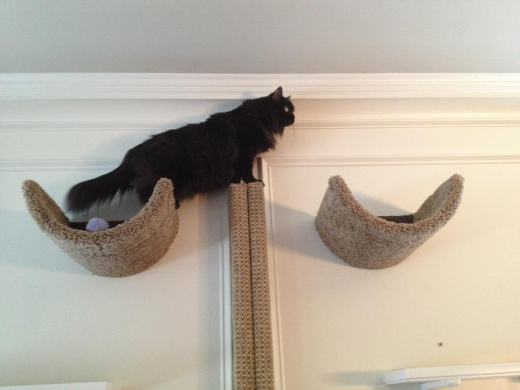 The scooped beds are well loved by virtually every cat.