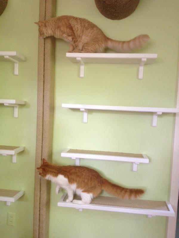 Exploring their new space
