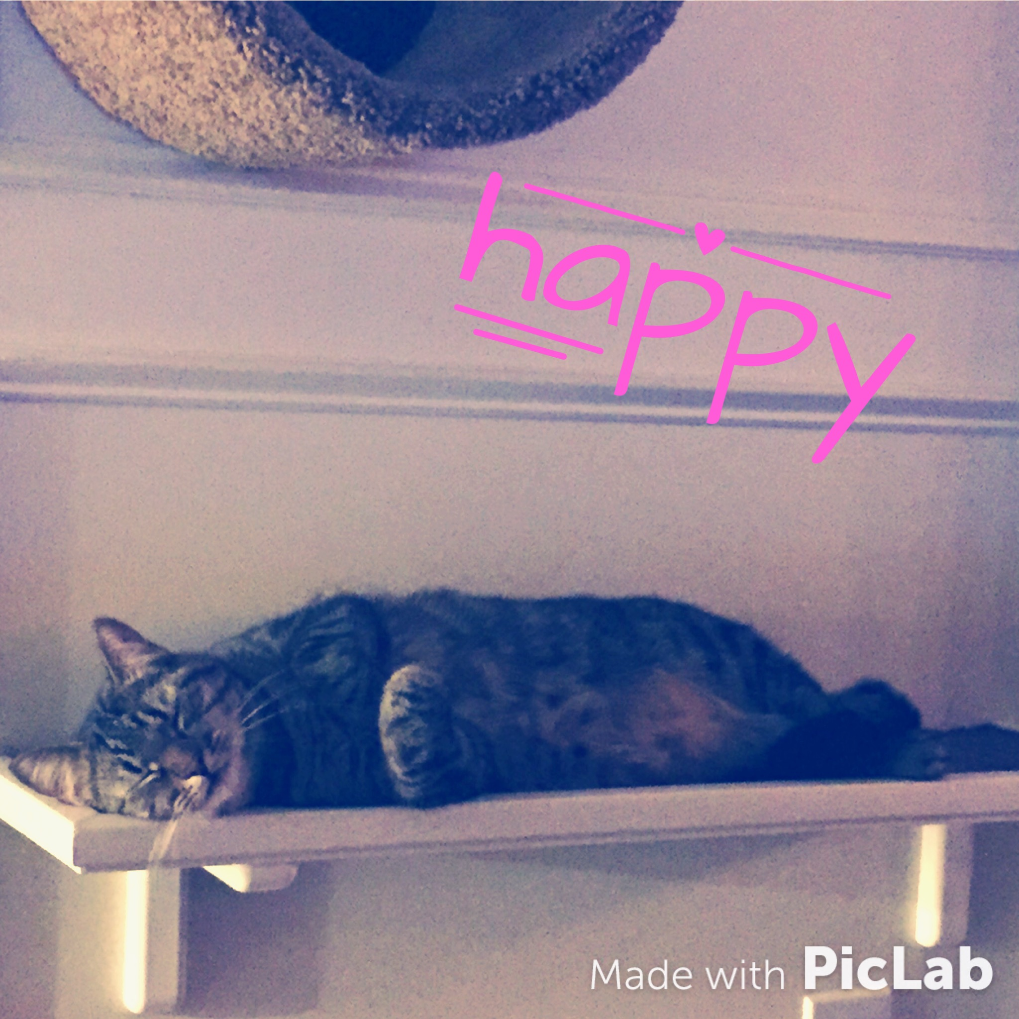 Guardian submitted photos of happy felines.