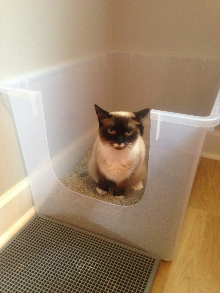 Constipation In Cats Fundamentally Feline