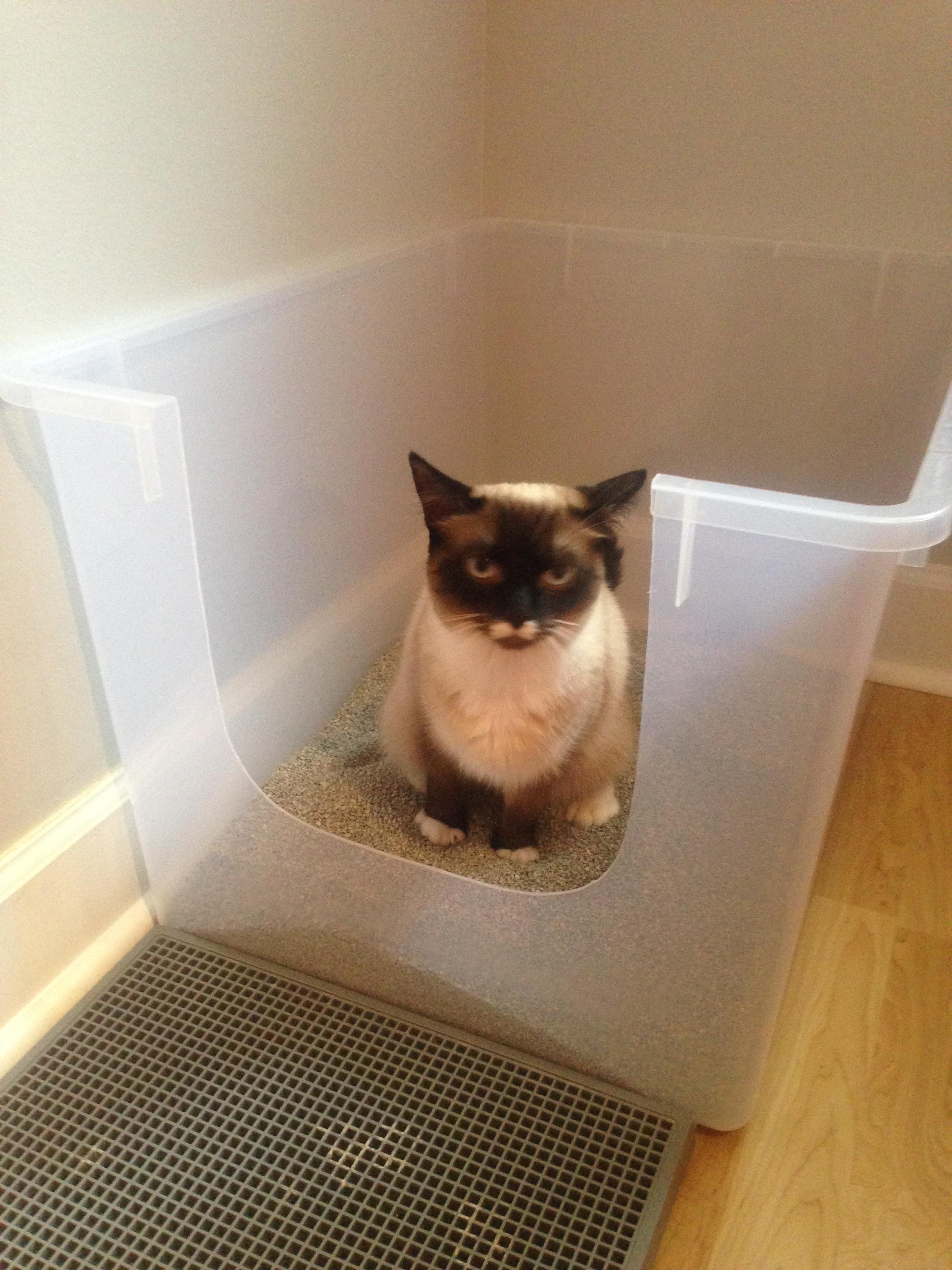 constipation in cats fundamentally feline rh fundamentallyfeline com Functional Megacolon Treatment for Megacolon in Cats