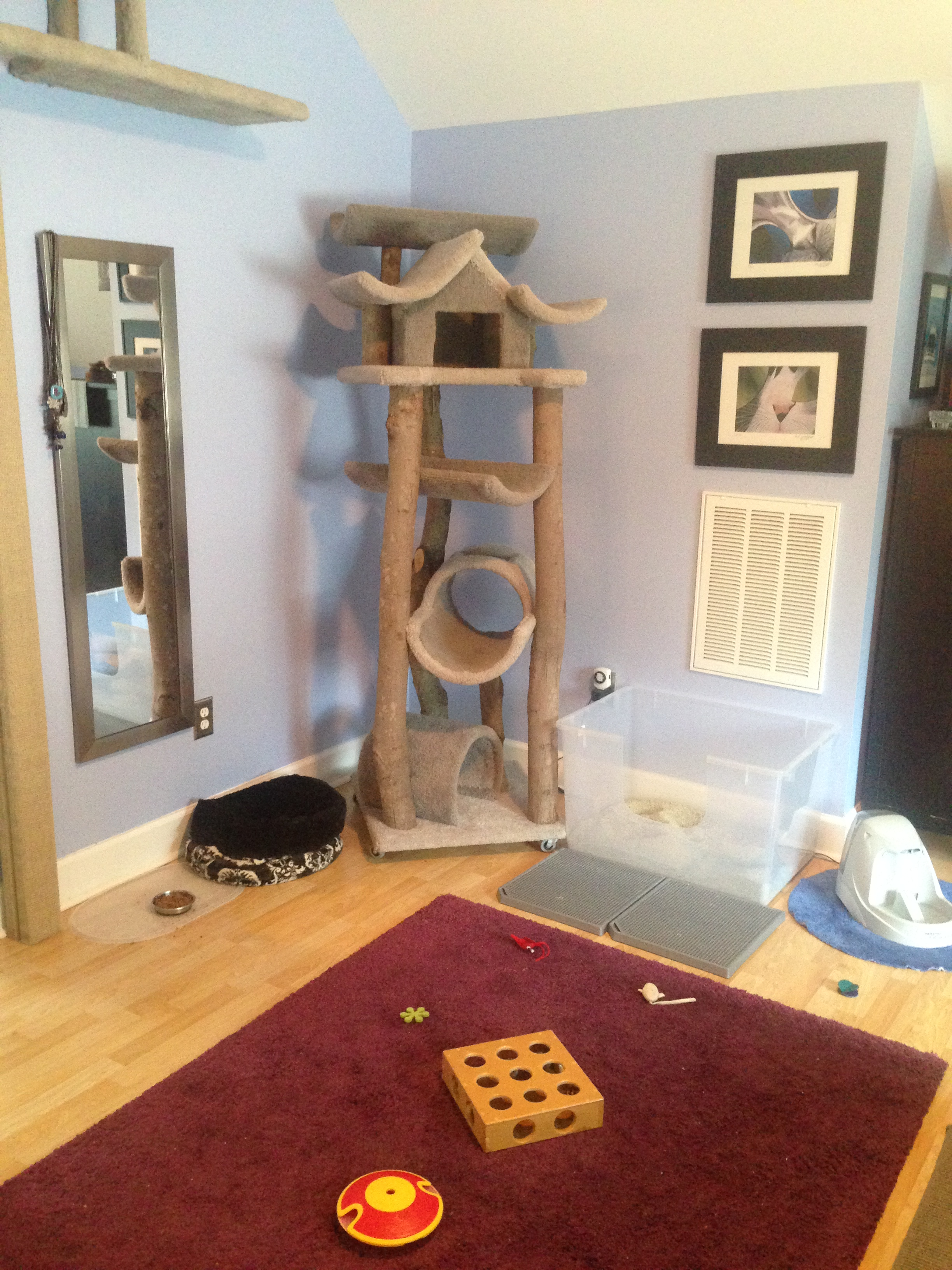 Master bedroom: can food bowl, water fountain, litter, foraging toys, & vertical space.