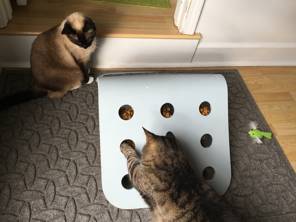 Ikea Hack Diy Food Puzzle For Cats Fundamentally Feline