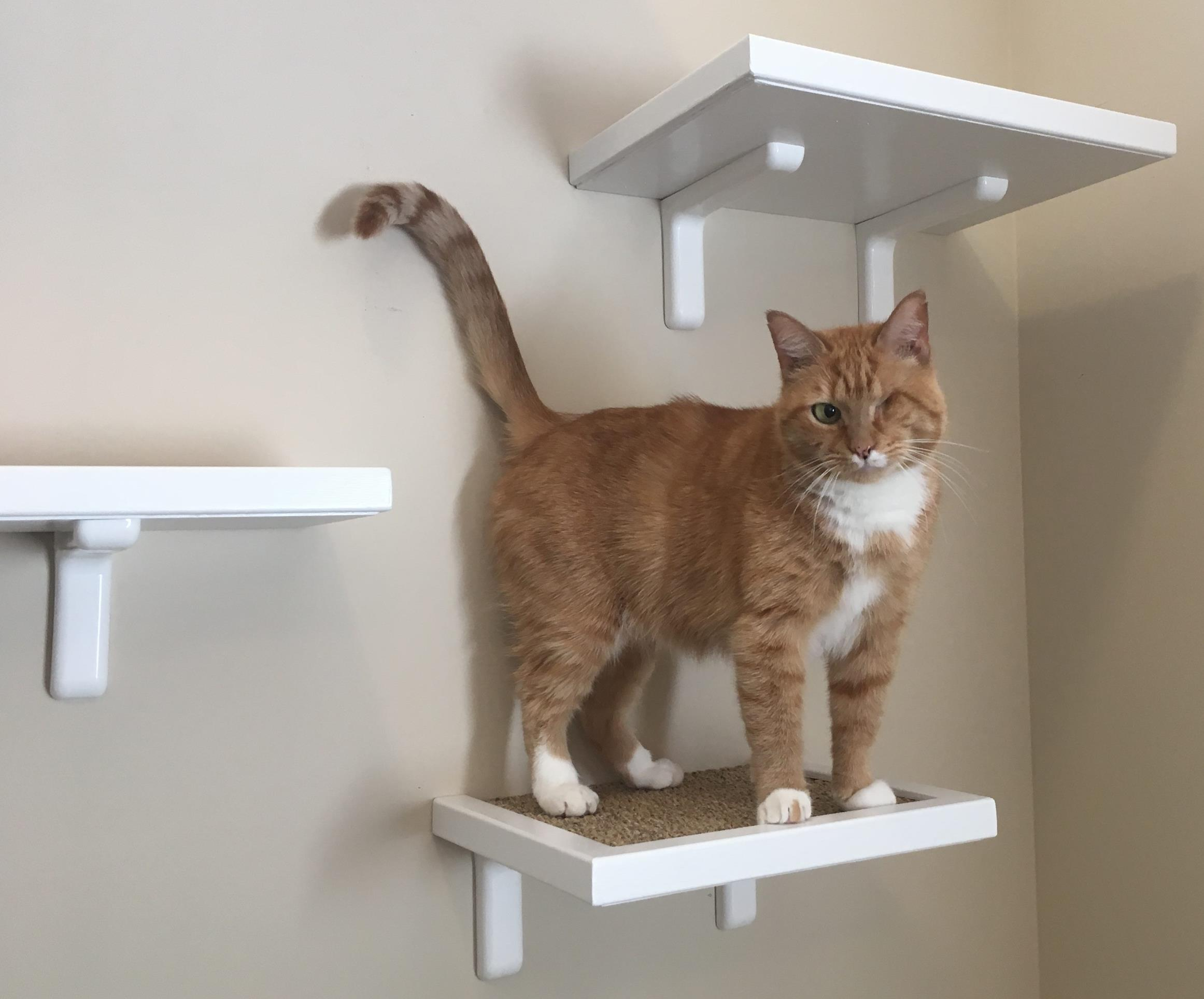 wall mounted cat furniture. Brilliant Mounted Sisal Cat Perch 12u2033 More Of A Step To Wall Mounted Furniture