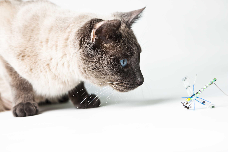 cat 2 top link