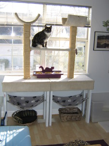Cat furniture can also be a great feeding station away from dogs and toddlers.