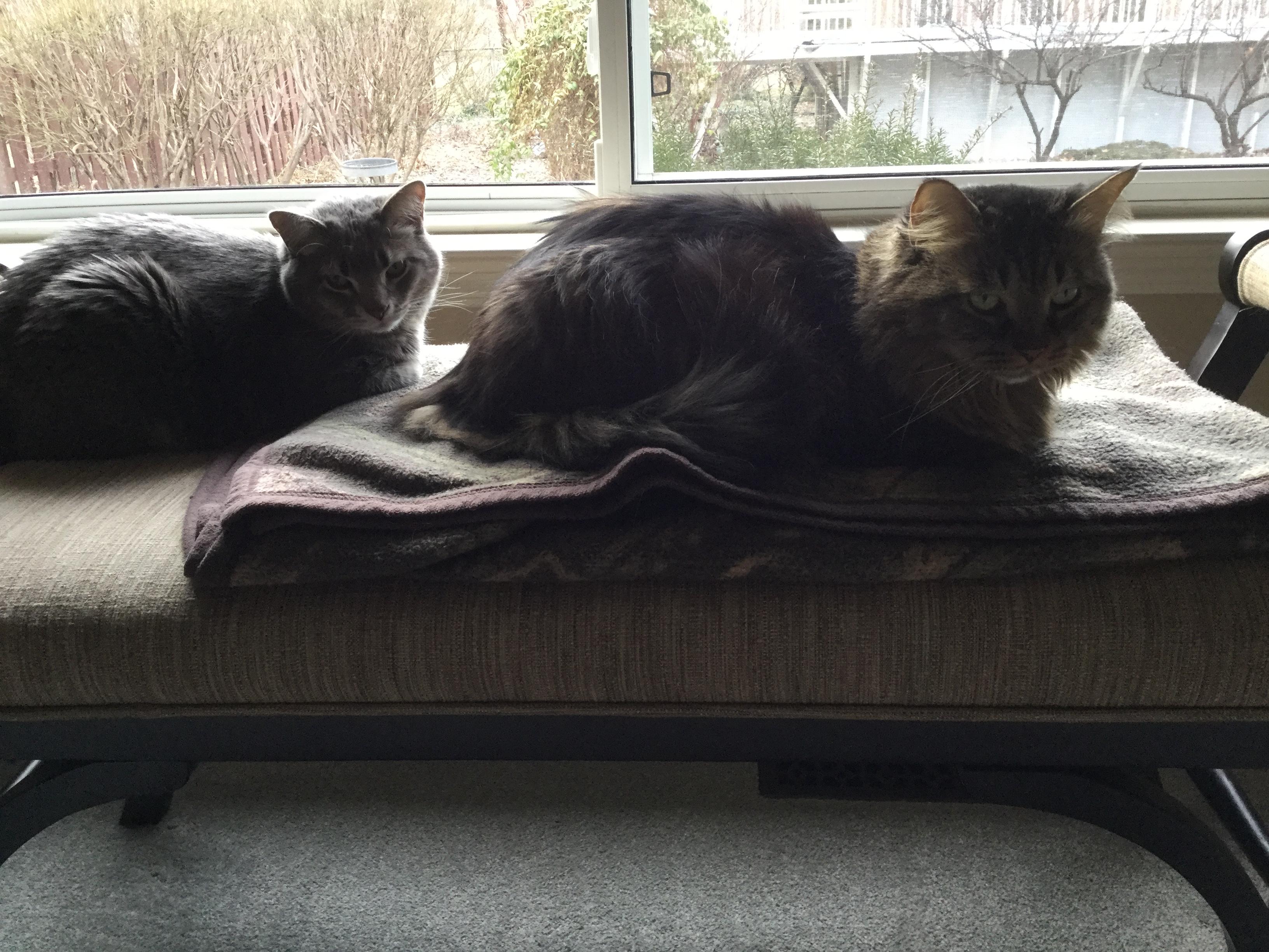 Pinkerton cats 1