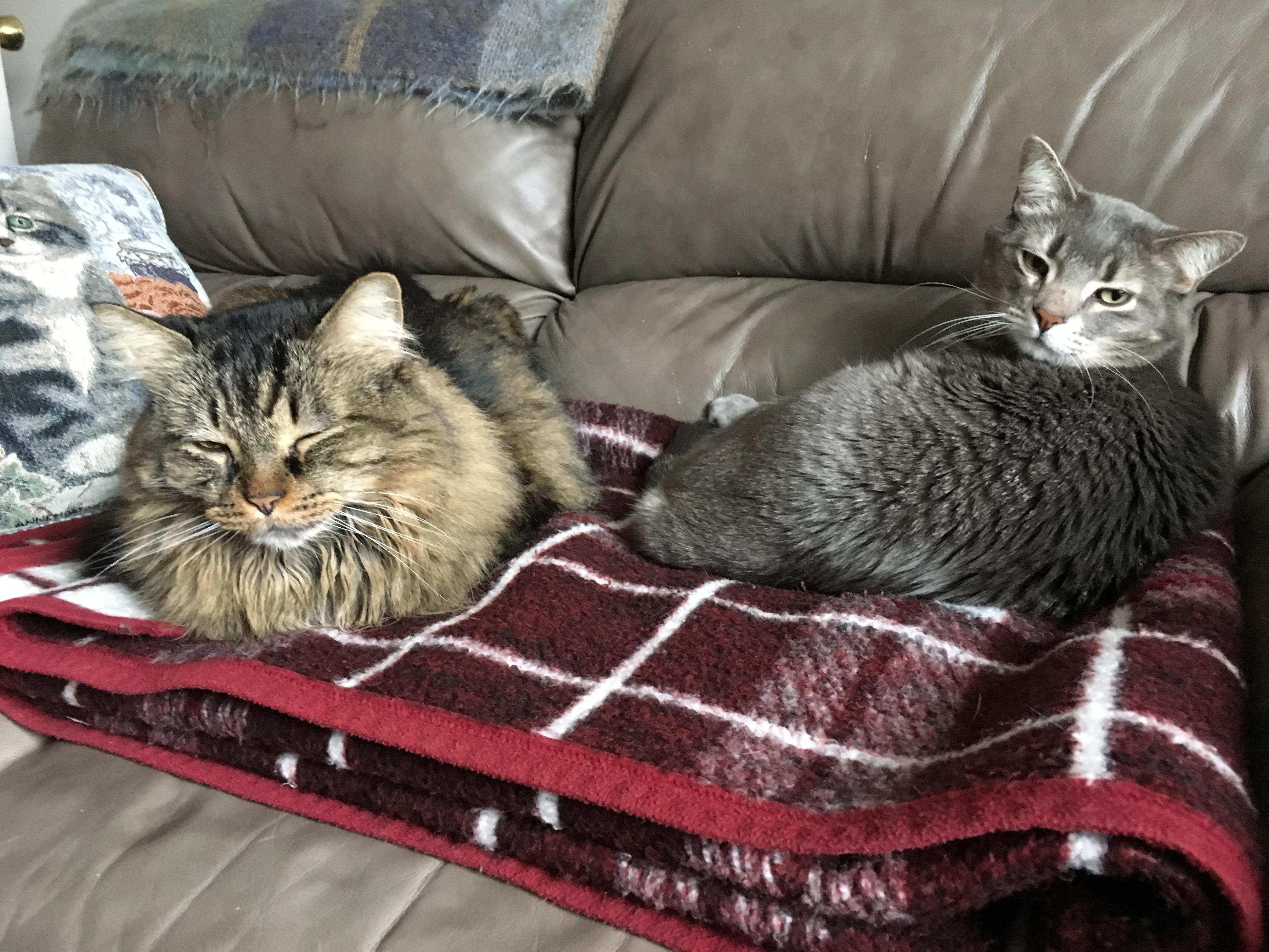 Pinkerton cats 2
