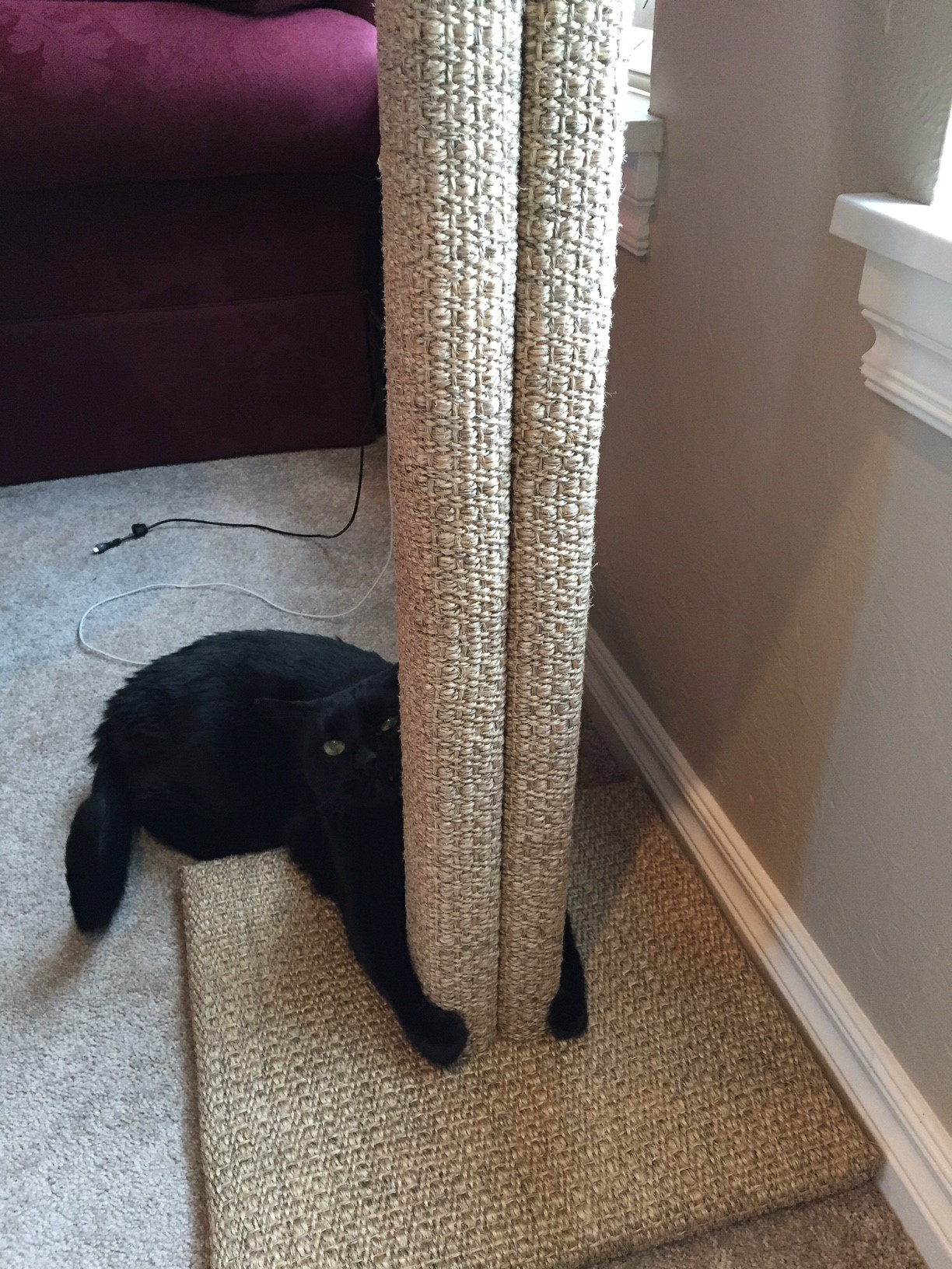 Rudy hugging his new scratching post by Fundamentally Feline.