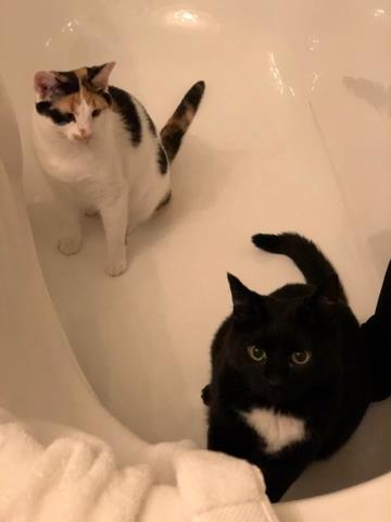 Bathtub playtime!