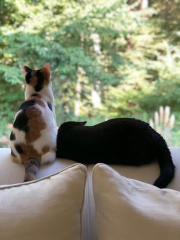 Watching the birds together - besties!