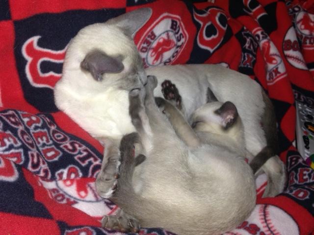 Vrnda's kittens 1