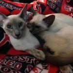 Vrnda's new kittens!