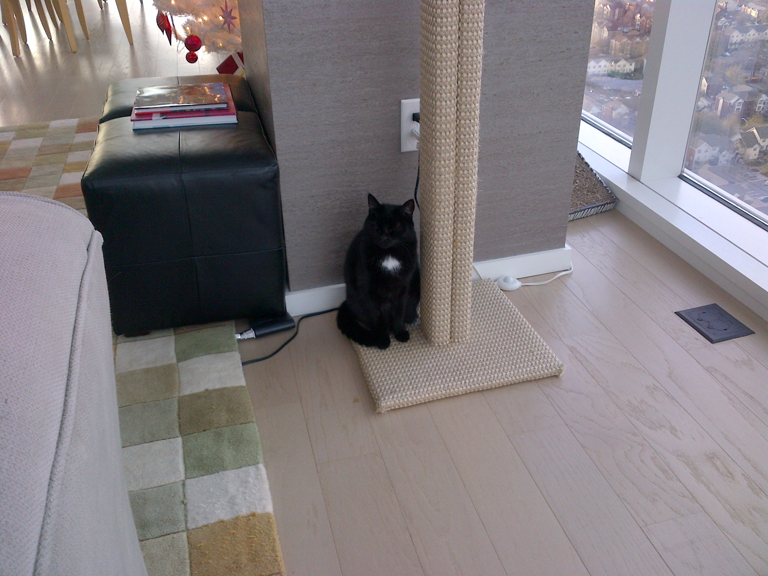 Wesson is very pleased with her stylish new scratching post by FF.