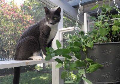 Soren enjoying fresh greens via vertical space.