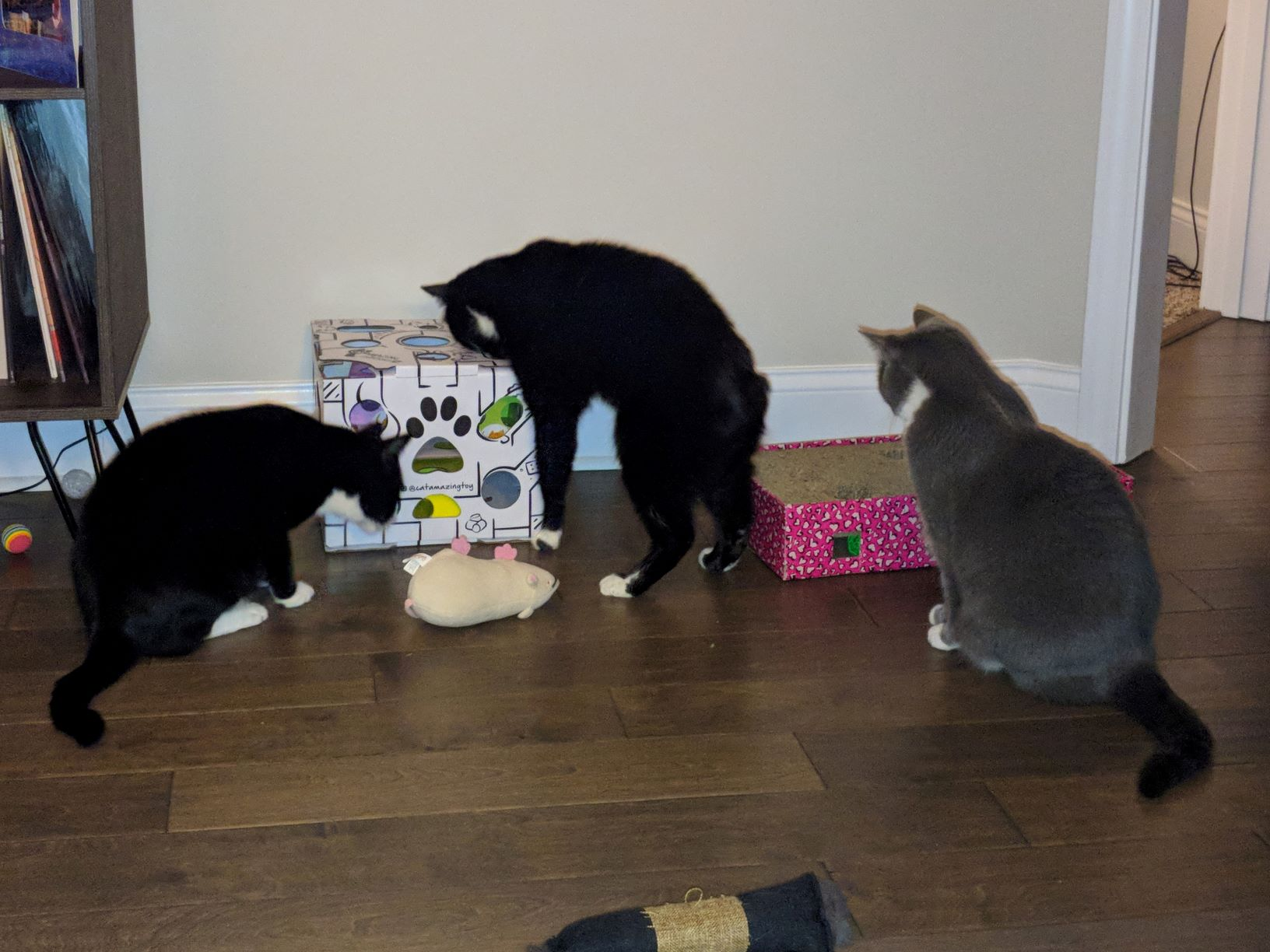 The original three boys foraging together!